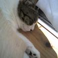 猫の里親立候補