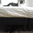 ベッドをはさんで