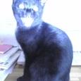ばっ化け猫