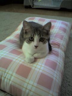 枕を新調した