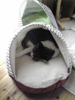 猫ベッド購入